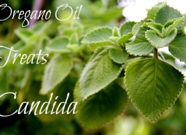How can Oregano oil treat candida overgrowth