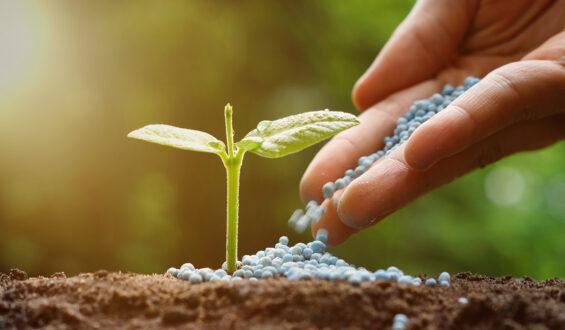 Sulphur Fertilizer Types